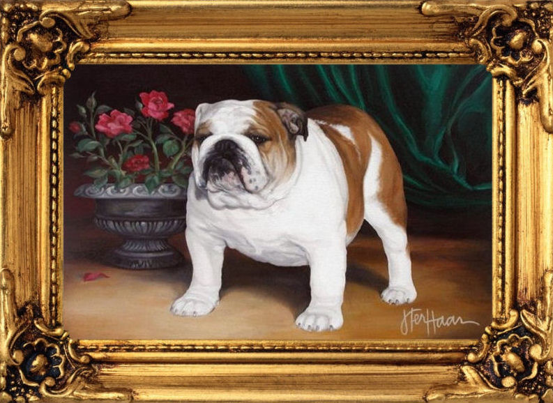 welcome to little pond bulldogs breeders and exhibitors